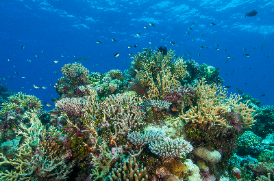 Learning resource of Coral Reef Ecosystems