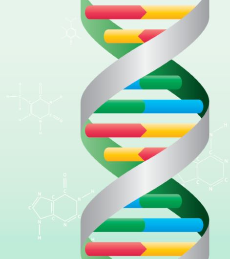 Learning resource of DNA and Animal Classification