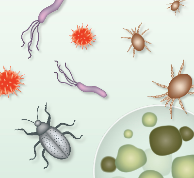 Learning resource of Growth and Survival of Living Things: Managing Microorganisms and Pests at the Museum