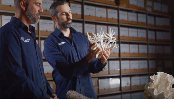 Museum at Home: Understanding coral takes more than meets the eye