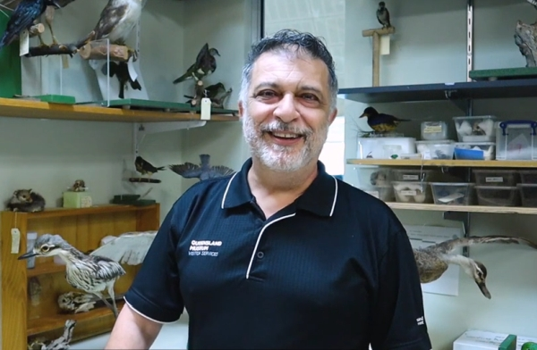 Learning resource of Pacific Black Duck | Little Learners | Queensland Museum Network