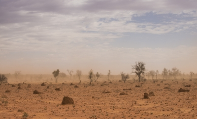 Learning resource of Spotlight On Survival: Animal Communities in an Arid Environment