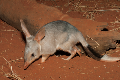 Learning resource of Staying Alive: Australian Animal Adaptations